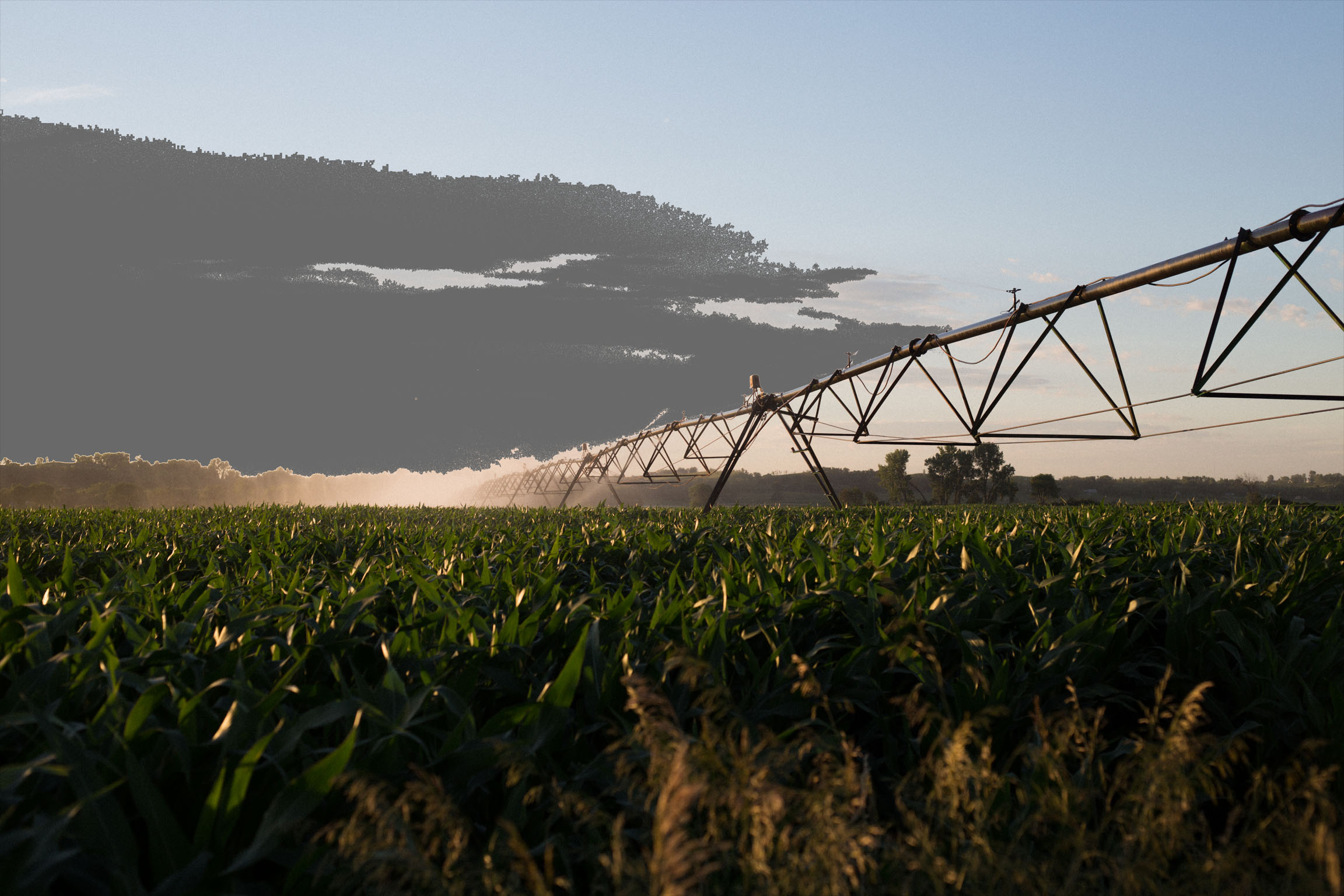 Field with Irrigation